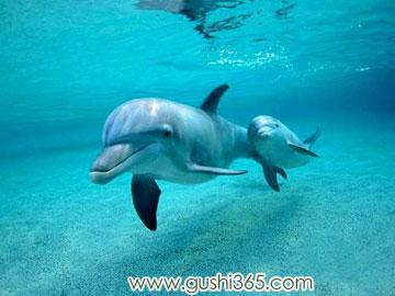 关于海豚的故事365