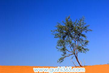 一棵長在沙漠上的小樹
