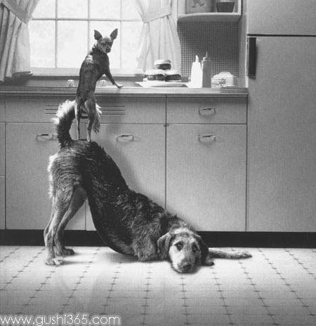 聪明雷人的狗狗