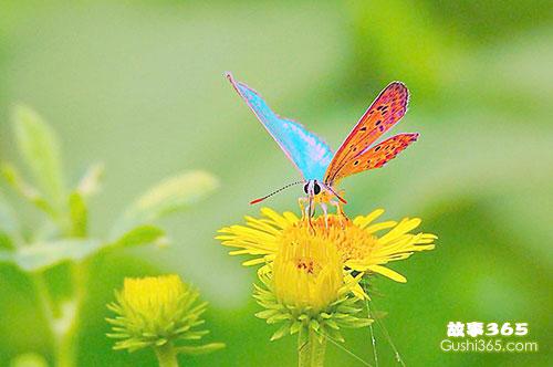 蝴蝶有一面小镜子
