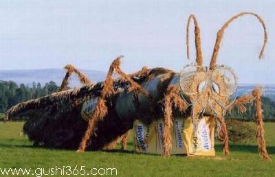 草原上的大甲虫