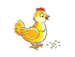 鸡妈妈吃石头