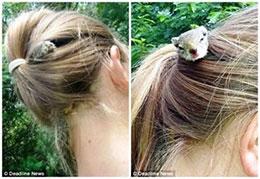寄居在女孩头上的小松鼠
