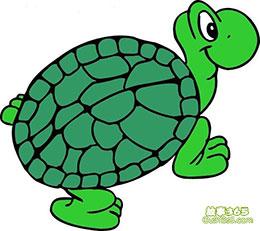 绿乌龟的梦想