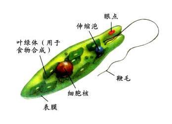 植物与动物之间的生物