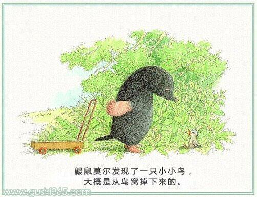 鼴鼠和小鳥(鼴鼠和鳥寶寶)