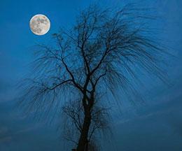 调皮的月亮