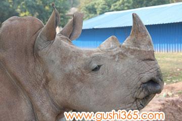戴安娜和她的犀牛