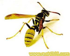 大黄蜂来了