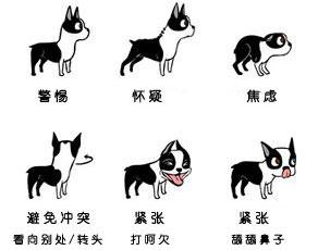 发现狗狗表情的秘密