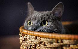 灰猫的故事