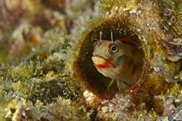 会补网的鱼——粘鱼
