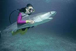 鲨鱼的弱点