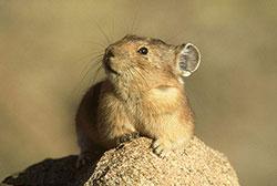 鼠兔的地下城堡