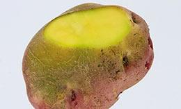 土豆变绿后是否有毒?