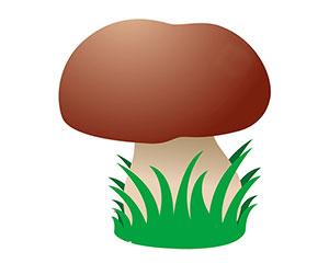 小香菇的奇遇