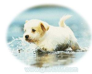 最美的小狗