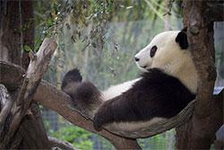 小时ω候看熊猫