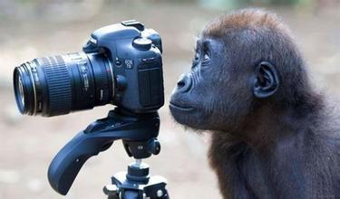 猩猩照相館