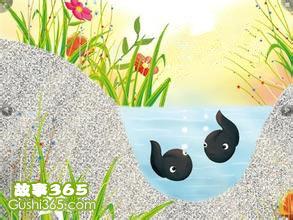 巖石上的小蝌蚪