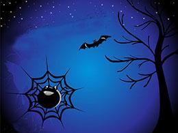 小蜘蛛和小星星
