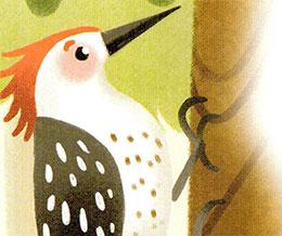 啄木鸟好医生(一次和九十九次)