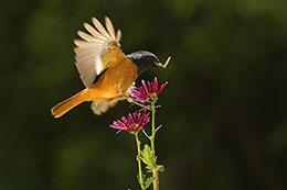 早起的鸟儿有虫吃