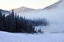 冬天的松林