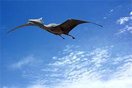 飞向蓝天的恐龙