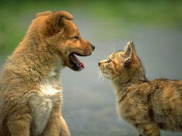 温馨感人的狗狗猫猫