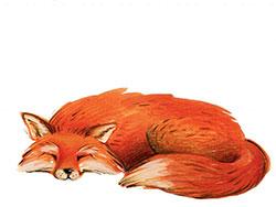 坏狐狸,好狐狸
