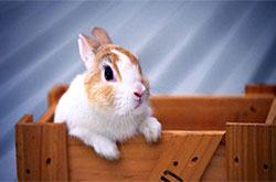兔子住的箱子