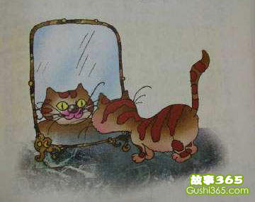 小花猫照镜子