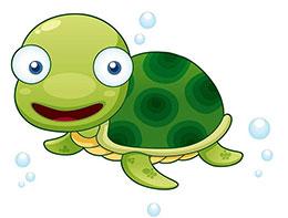 小海龟和小花猫