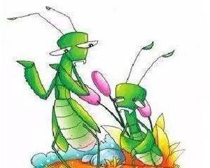 小螳螂学本领