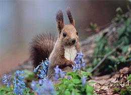 孤单的小松鼠