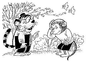 猴子栽核桃树