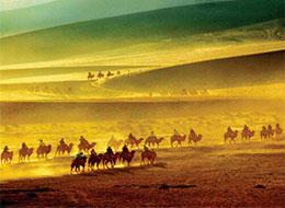 骆驼战沙狼