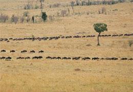非洲羚羊:把危险关在心门之外