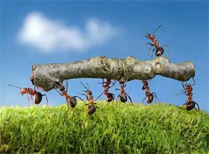 螞蟻搬家隊