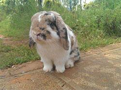 兔子到老木头村
