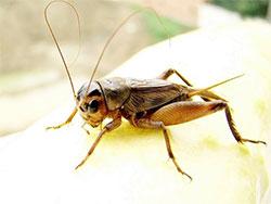 小蟋蟀盖房子