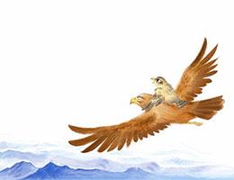 小鷹飛啊飛