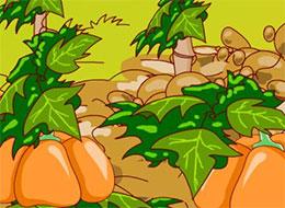 小野猪种南瓜