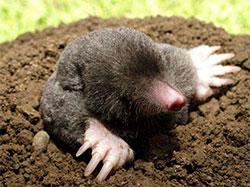 鼴鼠家的春天