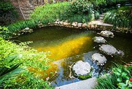 阳光跌进池塘里