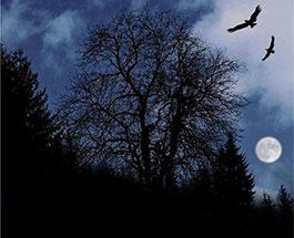 月亮掉进了灌木丛