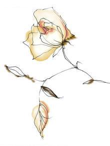 枣核状的玫瑰叶