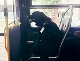 單身狗的坐公交車