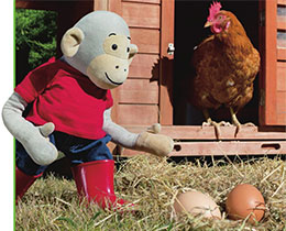 波比和小鸡